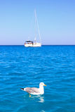 Seagull sea boat Royalty Free Stock Images