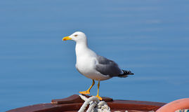 Seagull on a boat Royalty Free Stock Photo