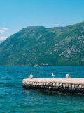 Seagull on boat moorage. Close-up. In Montenegro, the Adriatic S. Ea Stock Photography