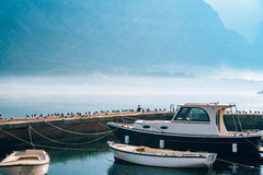 Seagull on boat moorage. Close-up. In Montenegro, the Adriatic Sea Royalty Free Stock Photography