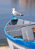 Seagull on boat Stock Photography