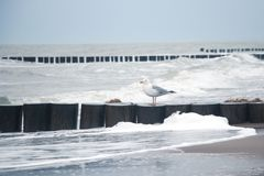 Seagull on breakwater royalty free stock photo