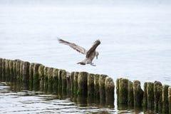 Seagull on the breakwater Stock Photos