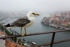 Seagull on bridge. Segull resting on bridge over river Douro in Porto Royalty Free Stock Photos