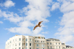 Seagull in Brighton Stock Images