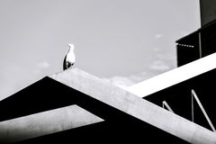 Seagull on building, black and white stock photo