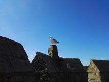 Seagull at Caernarfon Castle Royalty Free Stock Photography