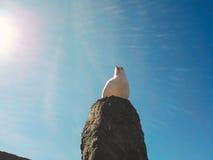 Seagull at Caernarfon Castle Royalty Free Stock Photos