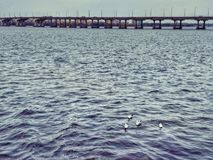 A seagull is cast over the river Dnieper. The city is immersed in gray haze. Bird in the middle of the water. Spring day. royalty free stock image