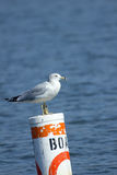Seagull on a Channel marker Royalty Free Stock Photography