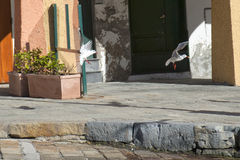 Seagull chase in portofino. Houses background stock image