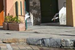 Seagull chase in portofino Stock Image