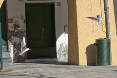 Seagull chase in portofino. Houses background stock images