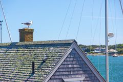 Seagull on chimney of oceanfront building. On Martha`s Vineyard in Massachusetts stock image