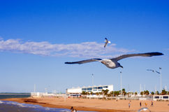 Seagull on Chipiona Royalty Free Stock Images