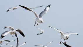 seagull chmurny latający niebo Obrazy Royalty Free