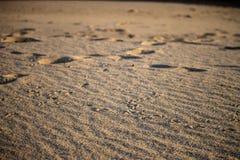 Seagull cieków oceny w piasku zdjęcia royalty free