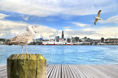 Seagull in the city Stock Photos