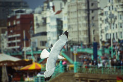 A seagull and the city Stock Photography