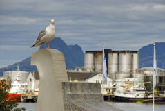 Seagull in the city Stock Image