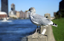 Seagull in city Stock Photo