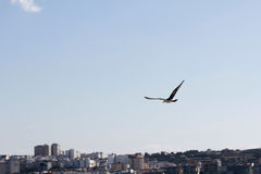 Seagull on the city Stock Photography