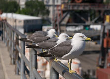 Seagull at the city port. Stock Images