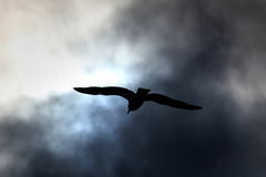 Seagull in cloudy sky Royalty Free Stock Photo