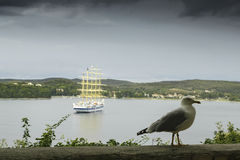 Seagull with the coast. In the background Stock Photo