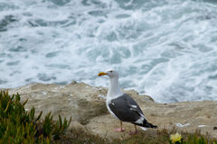 Seagull at the Coast Stock Photos