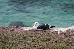 Seagull at the Coast Stock Photography