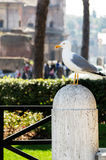 Seagull on the column Stock Photography