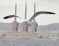 A seagull covering the three chimneys of Barcelona royalty free stock photography