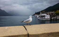 Seagull and cruises background Royalty Free Stock Image