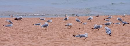 Seagull Day Spa royalty free stock image