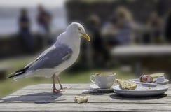 Seagull - den osedda verkligheten arkivfoto