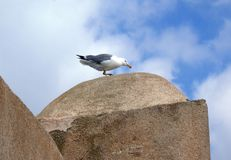 Seagull on dome. Of old building Royalty Free Stock Photos