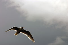 Seagull dream Stock Photo