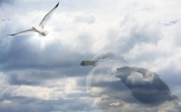 Seagull Dreams Royalty Free Stock Images