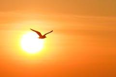 seagull ανασκόπησης ηλιοβασίλ&e Στοκ Φωτογραφίες