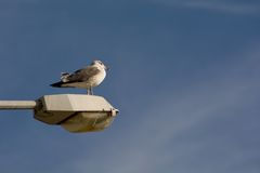 Seagull on Earth Royalty Free Stock Photography