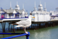 Seagull at Eastbourne Pier Stock Photography