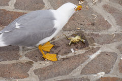 Seagull eating a crab on the pier Stock Image
