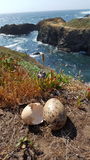Seagull eggs ocean Royalty Free Stock Photography