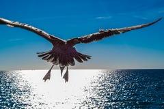 Seagull EL στοκ εικόνα με δικαίωμα ελεύθερης χρήσης