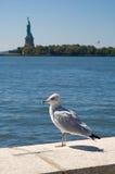 Seagull on Ellis Island Stock Image