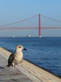 Seagull on embankment Stock Photography