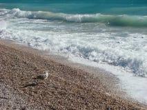 Seagull enjoying the summer weather stock image
