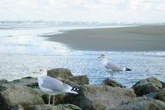 Seagull falochron obraz royalty free