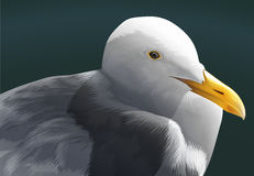 A seagull. A fat white seagull on black Stock Photo